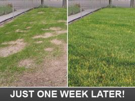this is howyour lawn will look after our Westchester sprinkler repair techs will fix your system